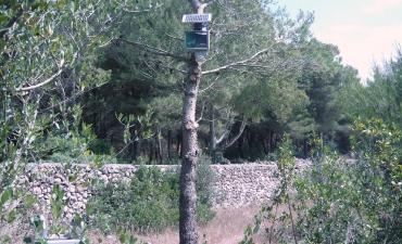 Sensore allarme incendi boschivi_11