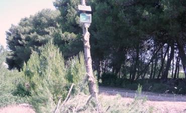 Sensore allarme incendi boschivi_12