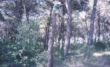 Sensore allarme incendi boschivi_15