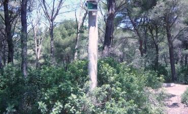 Sensore allarme incendi boschivi_17