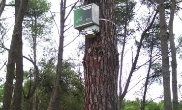 Sensore allarme incendi boschivi_2